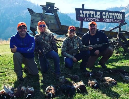 Upland Gamebird Hunting